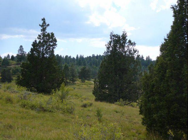 Beautiful 4.3 Acre Cabin Lot in Elk Ridge Estates, Kane County, UT